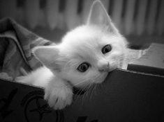 cute cats and kittens | black & white, cat, cute, kitten, kitty - inspiring picture on Favim ...