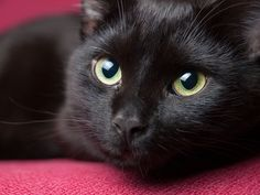 www.digital-photo-secrets.com tip 5998 photograph-black-animals