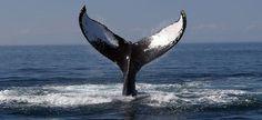 Circuit aux USA à Cape Cod, point d'observation idéal pour les baleines.