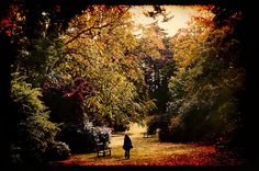 Secret garden     Awesome Pic! Check out this amazing video:  http://www.empowernetwork.com/commissionloophole.php?id=michaelrochau
