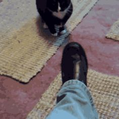 Fashion Police-Cat Hates Your Shoe