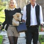 Celebrity Pommy Mommy of the Month: Gwen Stefani | Where Mommies of the Pomeranian Breed can gather, socialize and find organic home made do...