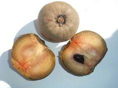 Ronde sapodilla. In Suriname 'sapotille' genoemd.