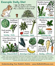 example, a rabbit could have 1 egg cup of pellets and a pile of hay per day, plus a selection of vegetables. One day it might be a cauliflower leaf and fresh basil/parsley and another day blackberry leaves, fresh grass and a small carrot. Bunny Cages, Rabbit Cages, House Rabbit, Rabbit Toys, Rabbit Treats, Rabbit Garden, Diy Bunny Cage, Rabbit Feeder, Pet Bunny Rabbits