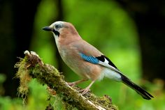 2480x1662 beautiful pictures of bird