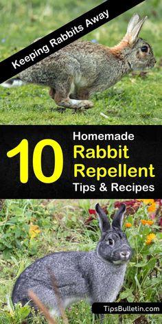 Rabbit Deterrent, Rabbit Repellent, Deer Repellant, Squirrel Repellant, Mice Repellent, Diy Garden, Garden Care, Lawn And Garden, Garden Bed