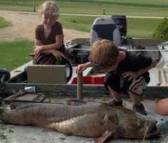 This monster flathead catfish - 44 inches, 43 pounds - was caught on a trotline baited with live bullheads in the Mississippi River. Learn more about flatheads from the Iowa DNR.