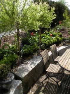 Ein Schweizer Garten: Harlekinweide Hakuro Nishiki