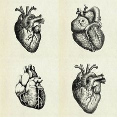 sketches drawing drawings art heart