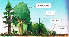 Warstwowa budowa lasu Montessori, Education, Plants, Plant, Onderwijs, Learning, Planets