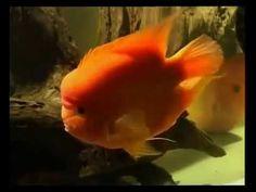 EXOTIC    FISH   SHOW