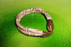 gold tinted snake bracelate