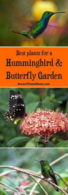Create a Butterfly & Hummingbird Garden Create a garden that attracts butterflies and hummingbirds with these beautiful plants. Includes best varieties and planting tips. The post Create a Butterfly & Hummingbird Garden appeared first on Garten. Flowers That Attract Hummingbirds, How To Attract Birds, Attracting Hummingbirds, Bee Attracting Plants, Hummingbird Flowers, Hummingbird Garden, Hummingbird Habitat, Hummingbird Photos, Hummingbird Nectar