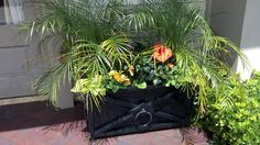 Designed by Shaun Doering, Landscape Designer at TLC Garden Centers. Sunny patio pot with Palms, Hibiscus,