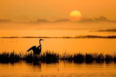 Early Bird by Nitin  Prabhudesai, via 500px
