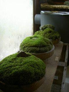 arrangement floral de mousse et lichen - Recherche Google