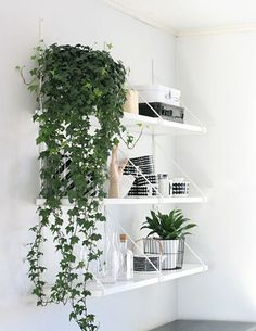 Green Thumb: The Easiest Indoor Plants to Grow In Your Home - The cascading greenery of an English ivy is the perfect, subtle touch of nature for your home. And according to WebMD, it's one of the most air-purifying indoor plants. It's also a great hostess gift when presented in a pretty basket or vase. English ivy is also easy to care for in your home. They do best in cooler temperatures, and with moist soil.