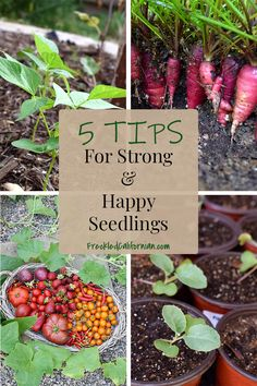 Starting a garden from seed is easy and budget-friendly Get my best tips and tricks for growing strong seedlings fertilizing transplanting and MORE startingseeds seedlings gardenadvice gardeningtips Growing Seedlings, Tomato Seedlings, Starting A Garden, Seed Starting, Gardening For Beginners, Gardening Tips, Growing Strong, California Garden, Garden Seeds