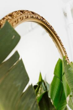 Stock photo of Detail of mirror and plant by careyshaw