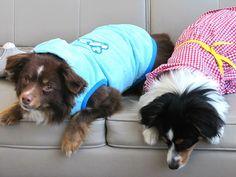 Fashionable dogs in the office wearing Martha Stewart Pets summer apparel  #marthastewartpets #petsmart