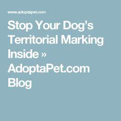 Stop Your Dog's Territorial Marking Inside » AdoptaPet.com Blog