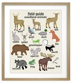 Field Guide to Woodland Animals art, features moose, bear, deer, duck, fox, raccoon and more. Nursery inspiration, #Nursery #art