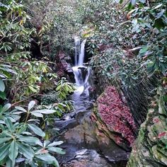 Found an Amazing spot for a future photo shoot !!! Yeay for waterfalls!  I Can't express how excited I am that this is so close to me and looks this awesome in the fall.  #photoshoot #waterfall #waterfalls #mountains #wanderlust #travel #explore #linvillefalls #tropical #secretgarden #adventure #boho #gypsy #instagood #positive #goodvibes #goodday #nature #scene #instatravel #love #autumnleaves #autumn #hawaii #blueridge #outdoors #like #exploreeverything #exploremore