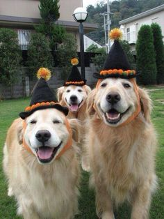 Happy golden halloween