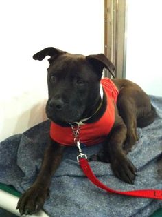 Please meet Tyson, 7 yrs - loving all the people! Come by and add some more love to Tyson's day! He is great on walks, seems to be very potty trained, sits and gives his paw paw on command.    Tyson is a available for adoption at L.A. Love & Leashes, located on the 1st floor of the Westside Pavilion mall at 10800 West Pico Blvd, Los Angeles, CA 90064.