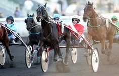 Prix de Brest et de Pardieu samedi à Vincennes photo@ ScoopDyga