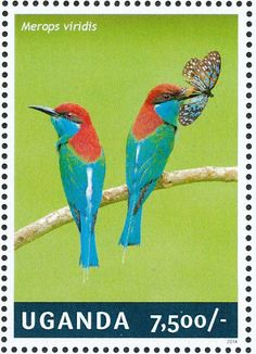 Blue-throated Bee-eater stamps - mainly images - gallery format