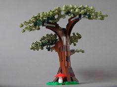 Oak Tree (bottom view)