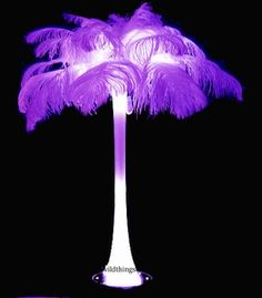 Feathers & Ostrich Feathers For Vases & More