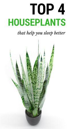 Top 4 houseplants that help you sleep better.