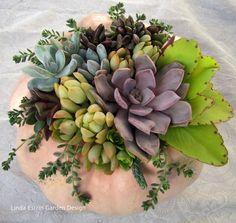 Succulent arrangement in a pumpkin pot.