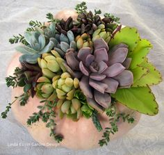 Succulent arrangement in a pumpkin pot.