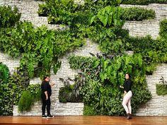 Jardim Vertical by Talita Gutierrez House Plants Decor, Plant Decor, Tropical Houses, Tropical Garden, Green Architecture, Landscape Architecture, Vertical Farming, Vertical Gardens, Jardim Vertical Diy