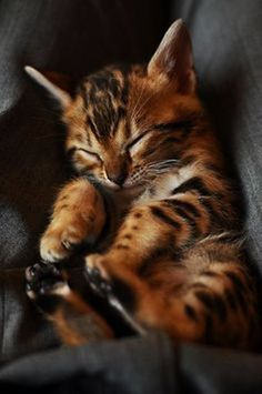 OMG! This kitty is toooo adorable! What beautiful markings……