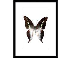 Verleihen Sie Ihren Wänden einen neuen Look. Gerahmter Digitaldruck Butterfly I in Mehrfarbig und weitere Wandaccessoires von G&C INTERIORS auf >> WestwingNow.