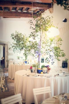 Blue, lemon and aromatic plants by Acanto Bcn