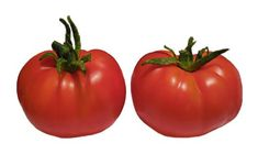 Heirloom Tomato Seeds, Tomatoes, Non-GMO, Untreated, Organic Seed – Sandia Seed Company Heirloom Tomato Seeds, Heirloom Tomatoes, Potted Fruit Trees, Seed Catalogs, Organic Seeds, Raised Garden Beds, Raised Beds, Roasted Tomatoes, Healthy Environment