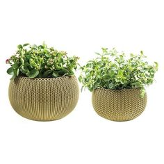 Small And Medium Cozy Knit Planter Set - Oasis White - Keter : Target