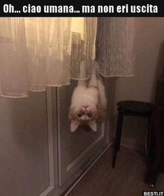 Cats 🐱 - Cat, cat memes, cats funny, cats and kittens and cats cute. Funny Animal Memes, Cute Funny Animals, Funny Animal Pictures, Cat Memes, Funny Cute, Cute Cats, Hilarious, Funny Logic, Cats Humor
