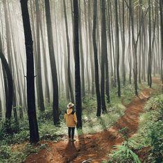 Forest Photography, Adventure Photography, Pre Wedding Photoshoot, Yogyakarta, Instagram Highlight Icons, Holiday Destinations, How To Take Photos, Adventure Travel, Travel Photos