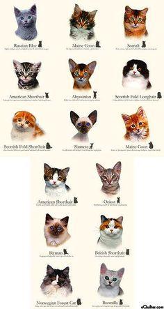 kitten to cat growth    kitten adoption rescue tnr