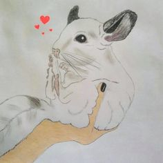 drawing of cute white chinchilla