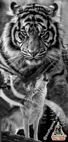 Tiger, Wolf, By: southgama_artist Indian Girl Tattoos, Black White Tattoos, Leg Sleeves, Sleeve Designs, Tatoos, Tattoo Designs, Wolf, Lion, My Arts