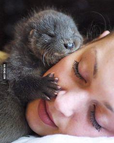 Baby otter loves hugging face