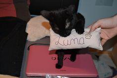 Luna Katze | Pawshake