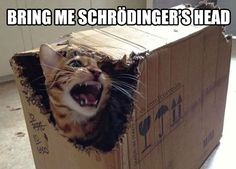Funny pictures about Schrodinger's Cat Final Results. Oh, and cool pics about Schrodinger's Cat Final Results. Also, Schrodinger's Cat Final Results photos. Memes Humor, Humor Nerd, Cat Memes, Funny Humor, Funny Animal Pictures, Funny Images, Funny Animals, Random Pictures, Funny Photos